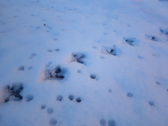 Close-up of snow in winter