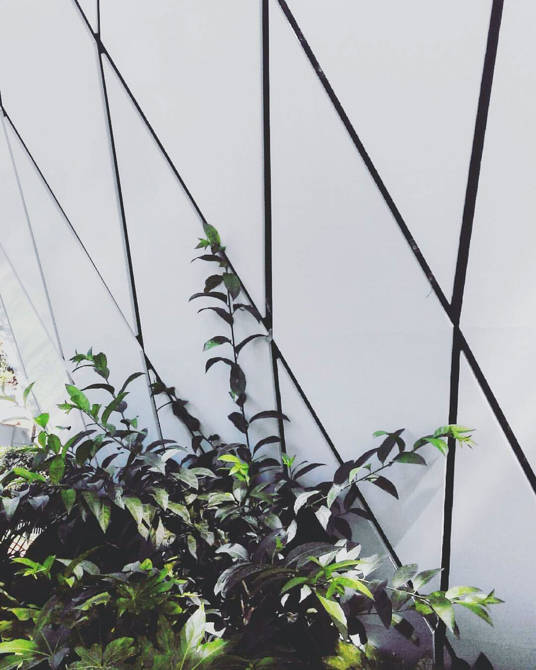 plant, growth, leaf, green color, nature, green, day, growing, no people, outdoors, close-up, stem, sky, beauty in nature, cable, fragility, tranquility