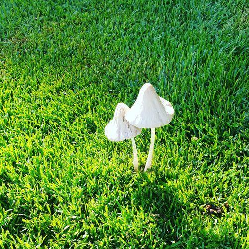 Doha,Qatar Landscape_photography Grass Green Color Outdoors Beauty In Nature Uae,abudhabi Mashrooms
