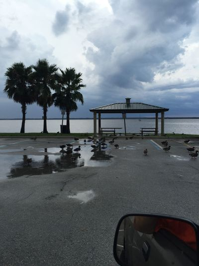 Sanford Marina Sanford Check This Out Ducks Drinking Rain Water End Of The Storm Taking Photos DUCKS :)