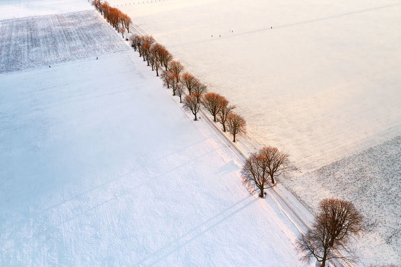 Drone view of a field and alley with trees covered with snow during sunset
