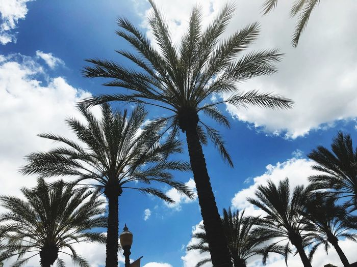 Looking up Clouds Cloud - Sky Palm Tree Tree Low Angle View Plant Sky Cloud - Sky Growth Beauty In Nature