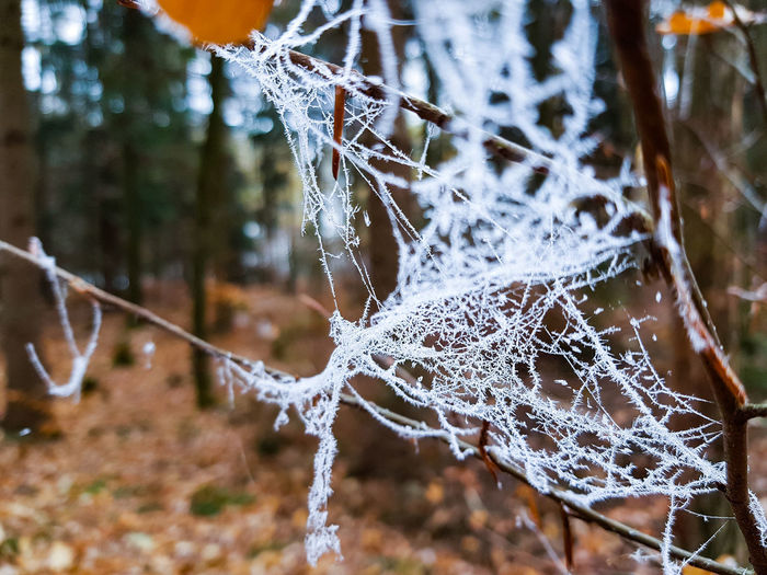 Frosty Trapped Water Spider Web Web Spider Close-up Animal Themes Arachnid Snow Covered Insect The Mobile Photographer - 2019 EyeEm Awards