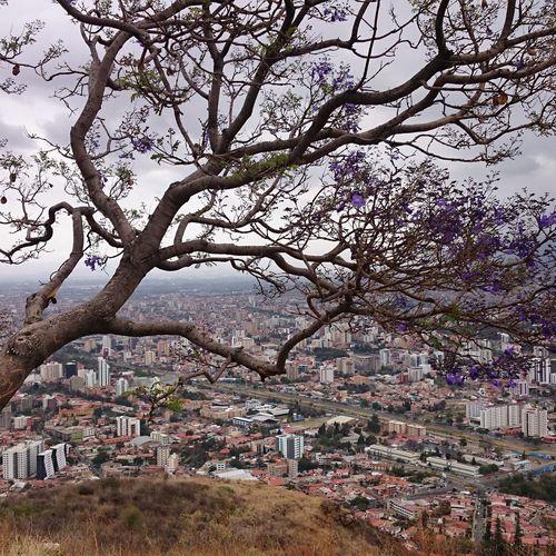 Cochabamba Bolivia Jacaranda Tree City Cloud