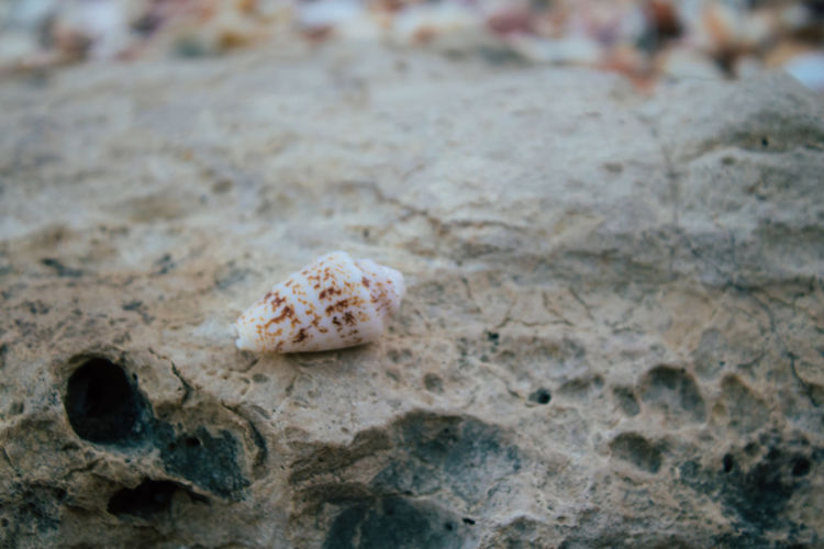 Close-up of seashell on rock