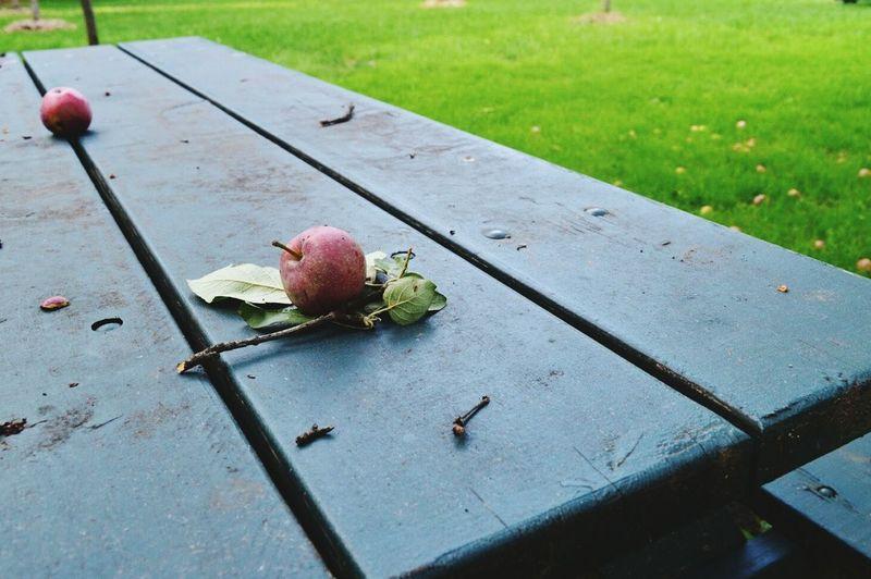 Depth Of Field Fruit Apples Nature Autumn Photography Nikon D3200 The Great Outdoors - 2016 EyeEm Awards