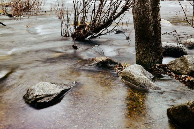 Dead tree trunk on rock by river