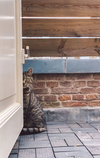 Cat sitting against brick wall