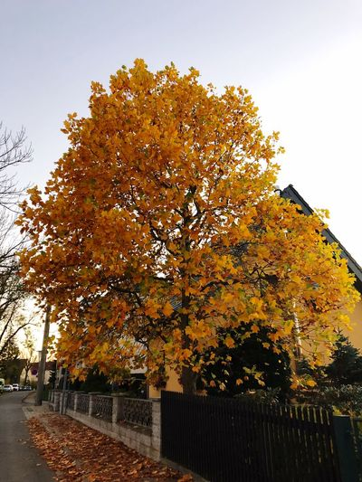 Fall tree Tree Plant Autumn Sky Built Structure Growth Nature Outdoors Beauty In Nature Orange Color