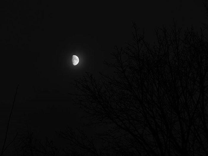🌛🌳🌛🌳🌛🌳 Mēness Koki Nakts Moon Trees Night Menesgaisma Moonlight Naturephotography Fotofanatics_sky_ Sky Skyphotography Nature Daba Latvijasdaba Riga Riga Latvija Latvia Showcase: January