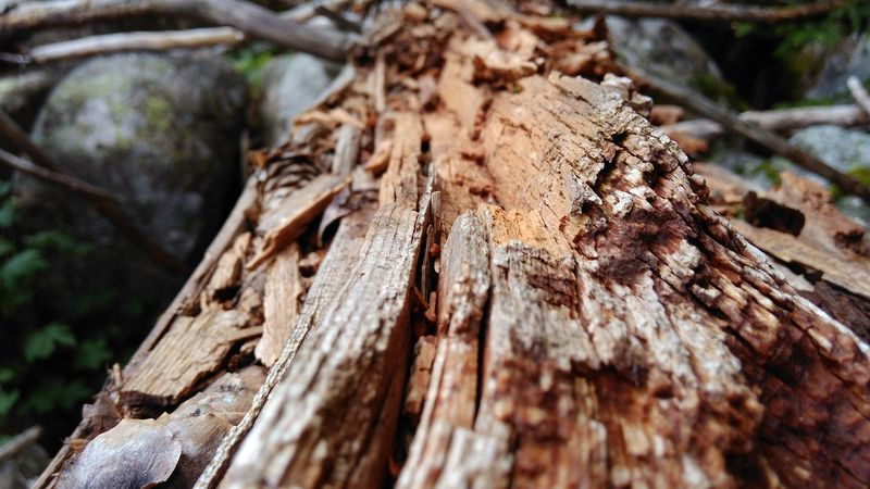 Backgrounds Bark Brown Close-up Day Detail Fallen Log Fallen Tree Fallen Tree Limbs Fallen Trees Focus On Foreground Log Logs Natural Pattern Nature No People Old Log Outdoors Rough Selective Focus Textured  Tree Trunk Wallpapers Wood Wood - Material