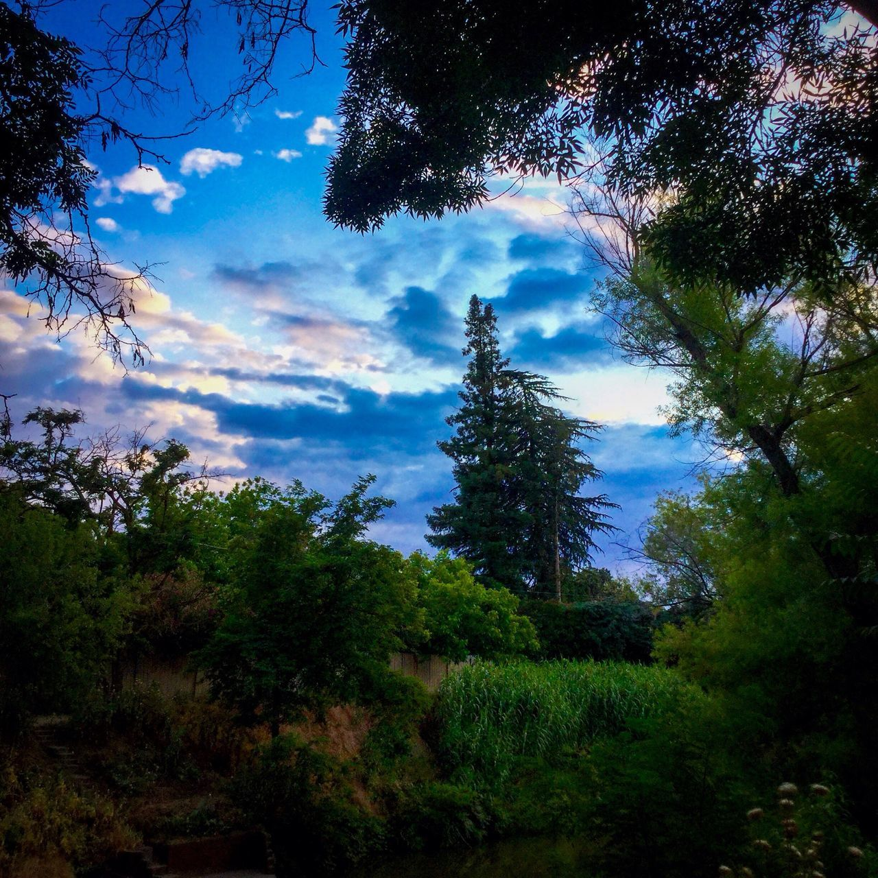 tree, nature, growth, sky, beauty in nature, cloud - sky, tranquility, tranquil scene, no people, scenics, forest, low angle view, outdoors, day, branch