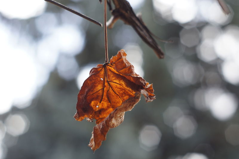 Close-up of dry leaf during autumn
