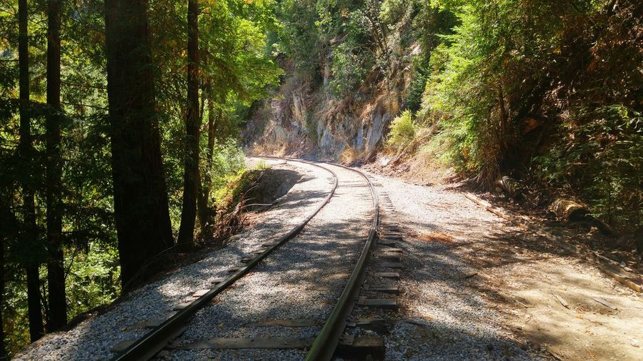 Railroad Track Amidst Trees On Sunny Day