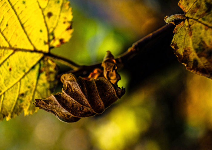 Autumn Green Color Pastell Beauty In Nature Branch Close-up Coloures Day Focus On Foreground Fragility Growth Leaf Nature No People One Animal Outdoors Plant Seasons Tree Yellow