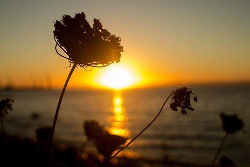 Valentine sunset Lr5 Flowers Flowerstagram Sunset Twilight Orange Photographer Canon T5 Landscape_lovers Piggyvalentine Vagoplane