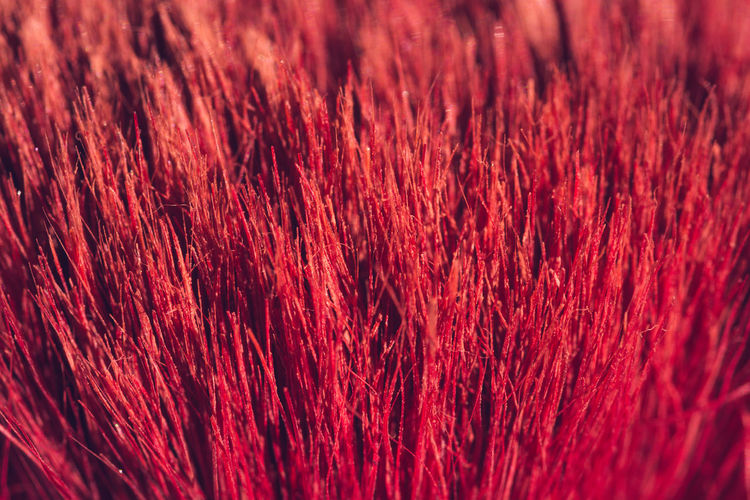 Make-up brush close-up. Backgrounds Close Up Photo Of A Brush Close-up France 🇫🇷 Full Frame Macro Photography Make Up Brushes Make-up Brush Maximum Closeness Red Red Background Red Bristles Red Brush Red Natural Hair