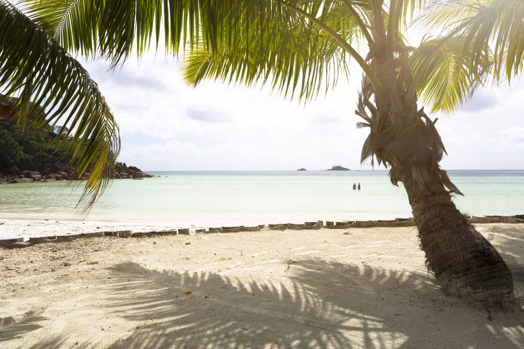 Sea Beach Water Land Tropical Climate Palm Tree Sky Tree Tranquility Horizon Over Water Scenics - Nature Beauty In Nature Horizon Sand Nature Plant Day No People Outdoors Coconut Palm Tree Tropical Tree Praslin Praslin Seychelles Seychelles Seychelles Islands
