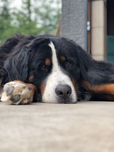 Dog One Animal Canine Dog Animal Themes Pets Animal Domestic