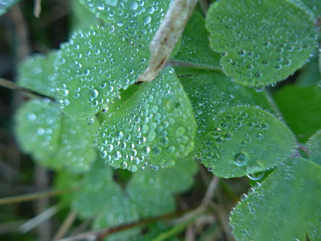 Beauty In Nature Close-up Day Drop Fragility Freshness Green Color Growth Leaf Nature No People Outdoors Plant RainDrop Water Wet I Am New Here. Breisgau