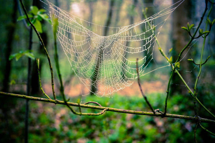 Forest spider web, Saint-Germain-en-Laye Spider Web Fragility Focus On Foreground Close-up Vulnerability  Nature Plant No People Spider Day Beauty In Nature Trapped Selective Focus Wet Outdoors Drop Fence Water Protection Complexity Web Spring Green Color Mystery Mysterious Foggy Morning Foggy Europe France