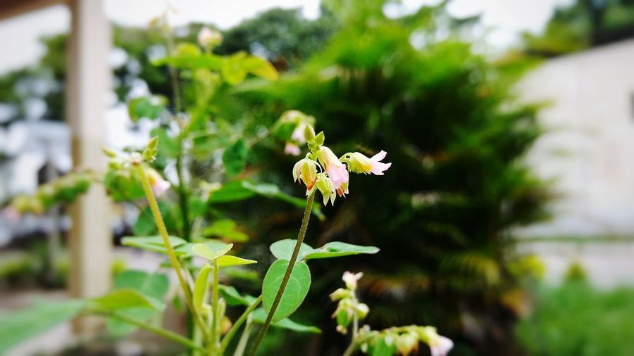 Plant Flower Green Color Nature Outdoors Day No People Growth Close-up Fragility Beauty In Nature Freshness Flower Head Ipatinga 3XSPhotographiUnity 3XSPUnity No People, Beauty In Nature Nature Outdoor Photography Forest Somenting Green