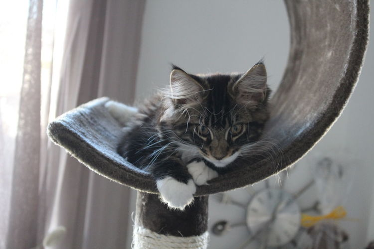 Close-Up Of Cat Lying On Scratching Post