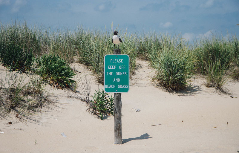 Beach Grass Outdoors Sand Sand Dunes Sea Gull Sign Warning Sign
