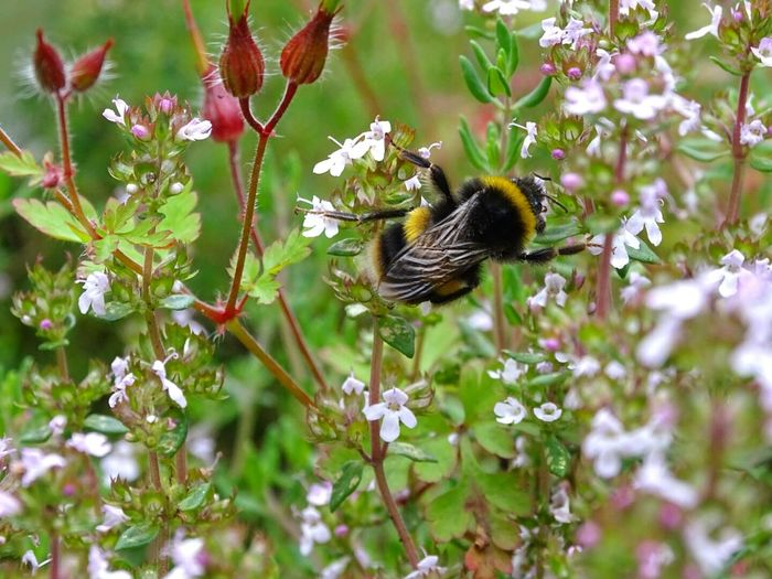 Bee Bee's World Climbing Plants Nectar Flowers Nature_collection Nature Photography