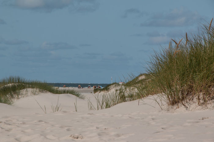 Amrum Kniepsand Beach Beauty In Nature Day Grass Marram Grass Nature No People Outdoors Sand Sand Dune Scenics Sea Sky Tranquil Scene Tranquility Tree Water