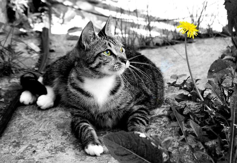 Cats Cat Katzen Cute Pets