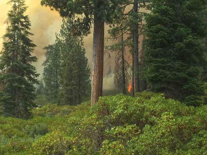 Tuolumne Fire Forest Remote Land Nature Green Color