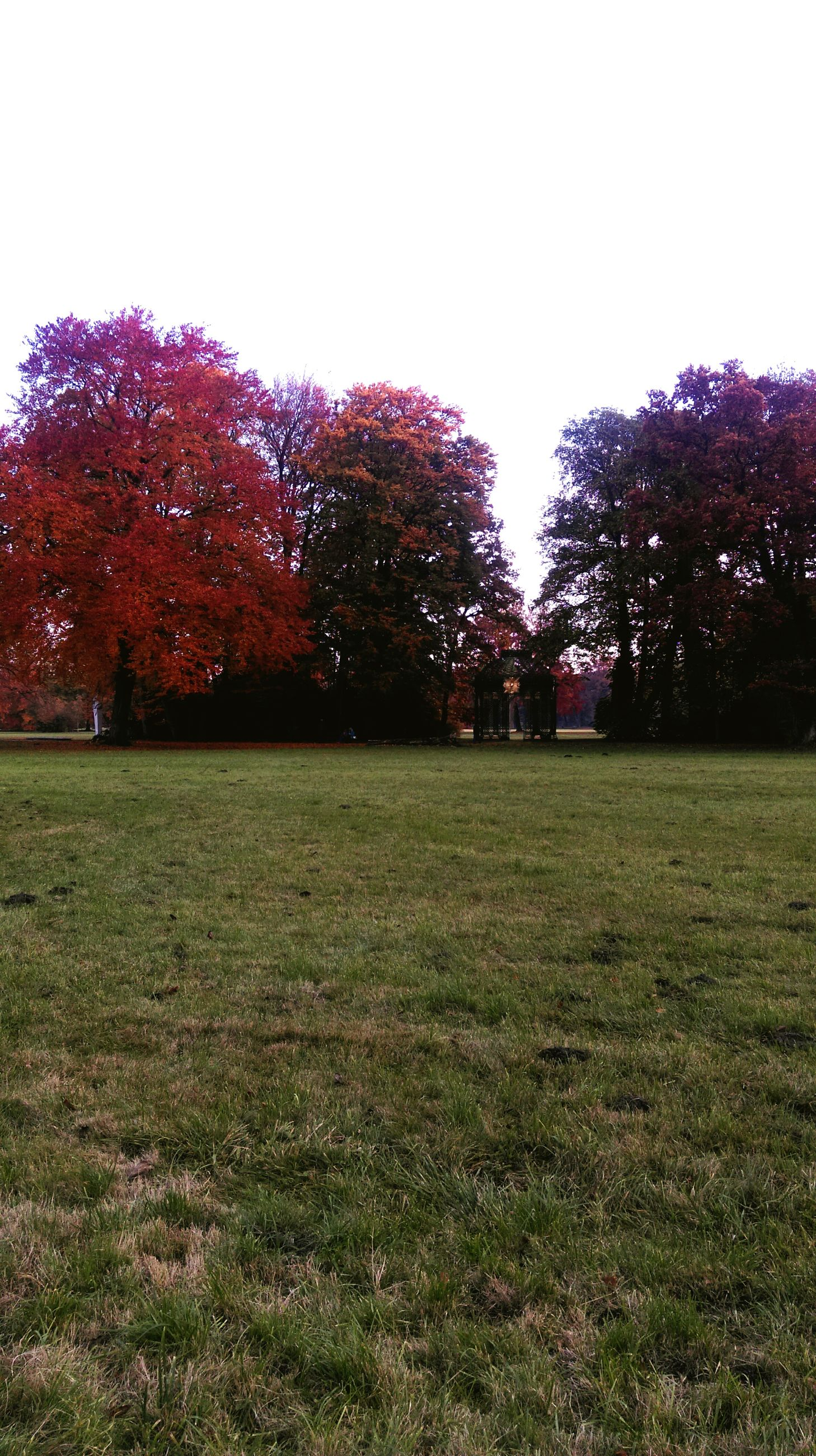tree, grass, clear sky, field, grassy, growth, tranquility, park - man made space, tranquil scene, nature, beauty in nature, landscape, copy space, green color, park, lawn, scenics, outdoors, no people, day