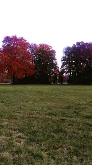 Potsdam Sans Souci Schlosspark Sans Souci Castle Unesco World Heritage Autumn Colors Of Autumn Autumn Leaves Red Leaves Red And Green Herbstspaziergang Autumn Colours Autumn Trees Herbst