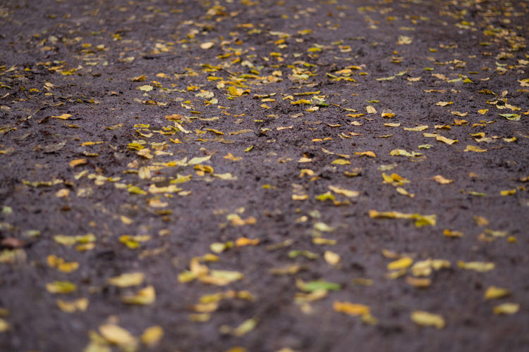 Selective Focus Autumn Full Frame Backgrounds No People Plant Part Leaf Road Day Street Falling Change Yellow Nature Footpath Leaves City Close-up Dry High Angle View Outdoors Surface Level Small England