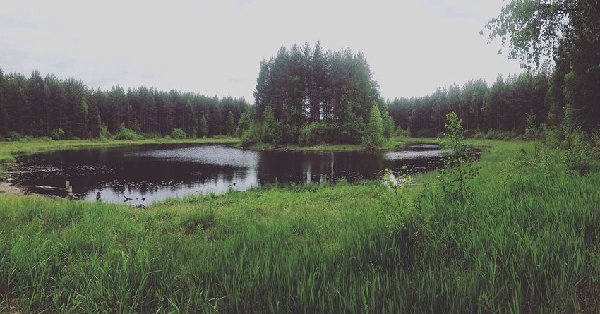 Tree Nature Water Grass Sky Forest Lake Summer First Eyeem Photo