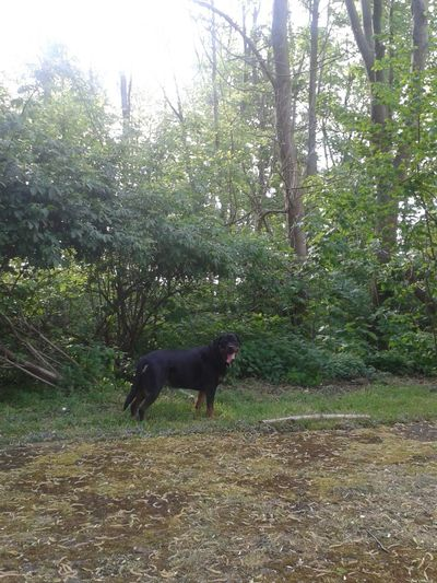 Unterwegsunddraußen mit Freya Dog❤ My Rottweiler EyeEm Dog Lover Hunderunde Dog Of Eyeem