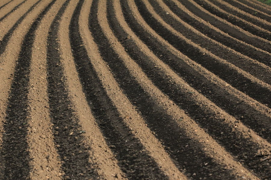Agricultural cultivation of fertile soil: freshly ploughed field Agriculture Furrow Ploughing Rural Agriculture Countryside Cultivated Cultivating Dirt Environment Farm Field Furrows In A Row Land Landscape Nature Outdoors Parallel Pattern Ploughed Ploughing Championships 2014 Rural Scene Soil Striped