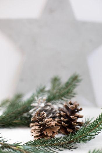 🖤 Gift Winter