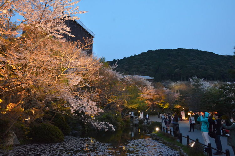 Everything In Its Place Large Group Of People Nature Outdoors Sakura Blossom Sakura Trees Scenics Sky Tree