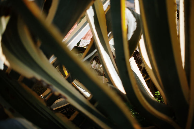 Cat Cats Cat Lovers Capture The Moment Selective Focus Close-up No People Growth Cactus Cactus Garden Pattern Pattern, Texture, Shape And Form Patterns In Nature Backgrounds Background Tranquility Travel Destinations Travel Hidden Cactus Leaf Leaves My Best Photo
