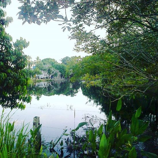 El mágico hogar de un gran amigo. Loquesientoespuraenvidia Venezuela Barinas Loveit ✌ Lake Nature Photography Beautiful Picoftheday Amazing Instapic