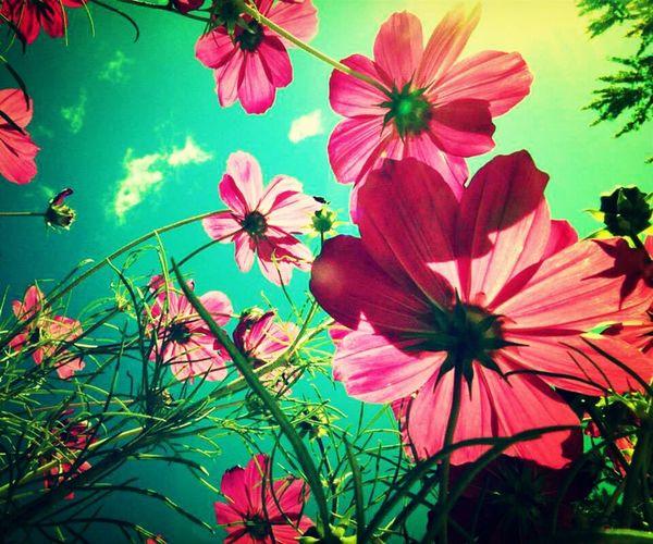 My Wallpaper ^-^ ♥ #flowers #sunny