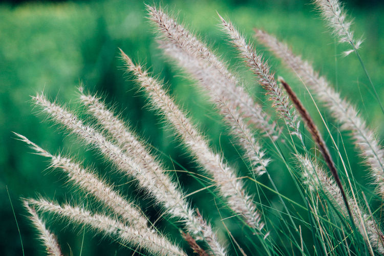 Close-up of stalks in grass