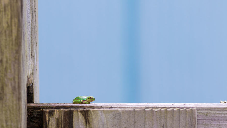 Close-Up Of Green Frog On Wooden Window Sill