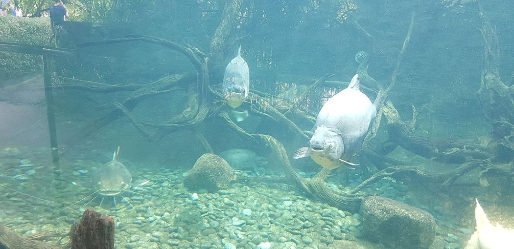 Big Fish UnderSea Sea Life Swimming Underwater Sea Water Fishing Net Scuba Diving Fish Close-up