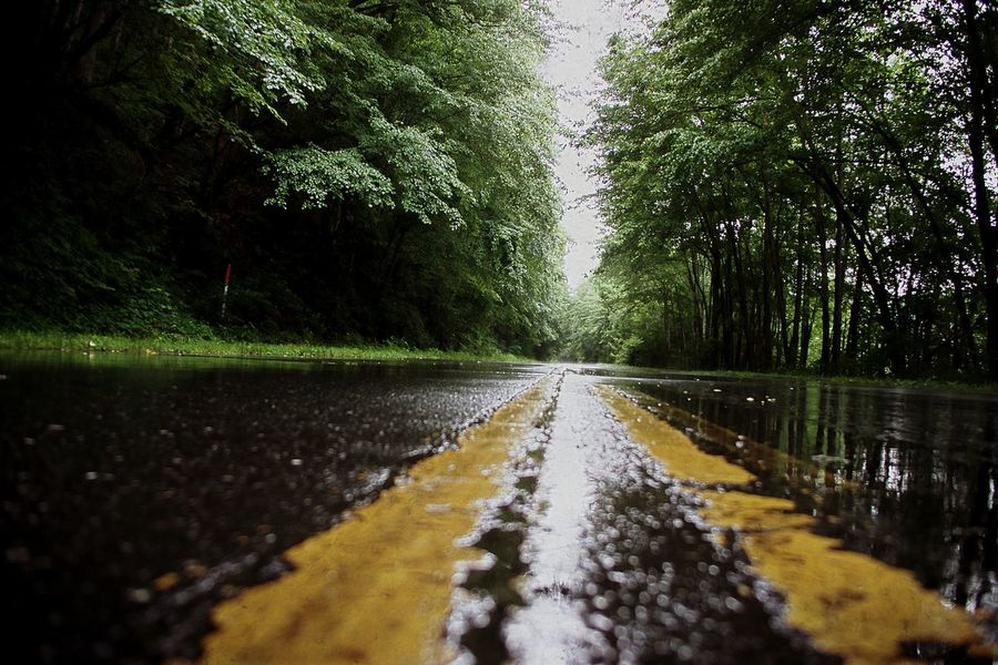 The Way Forward Wet Water Tree Surface Level Road No People Nature Outdoors Day Beauty In Nature