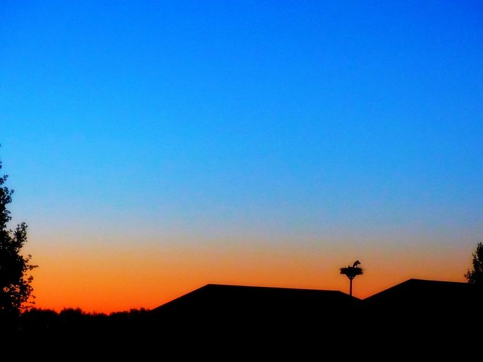 Silhouette Sunset Silhouettes Architecture Beauty In Nature Blue Building Exterior Built Structure Clear Sky Copy Space Cross Nature No People Orange Color Outdoors Plant Scenics - Nature Silhouette Sky Stork Stork Nest Sunset Tranquil Scene Tranquility Tree