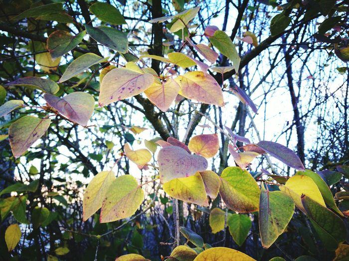 Sardegna Autumn