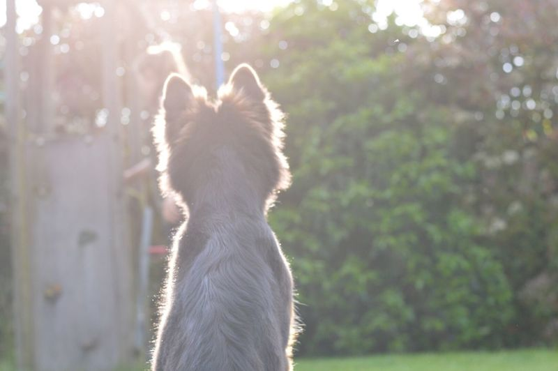 Let the sun shine on you Domestic Animals Pets Animal Themes One Animal Mammal Dog No People Nature Day Outdoors Tree Close-up